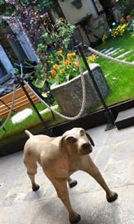 como-dog