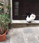 5-cat