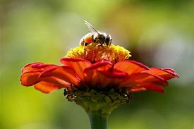 bees-toornto-star